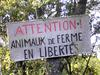 Attention, animaux de ferme en liberté. © Inra, M. Meuret
